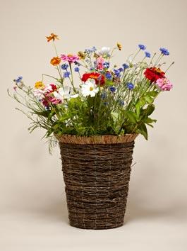 Mazzo di fiori di campo