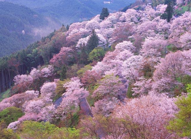 Passeggiata virtuale testimoni di geova online forum for Foto case giapponesi